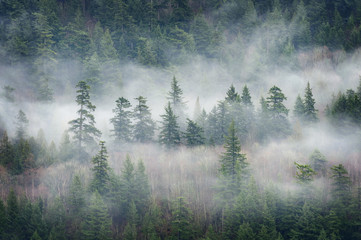 Rain Forest Clouds in the Pacific Northwest. Clouds descend on the fir and cedar forest above Harrison Lake in British Columbia, Canada. Fototapete