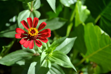 red and yellow flower blooming in the sun