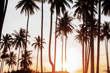 Coconut tree with sunrise.