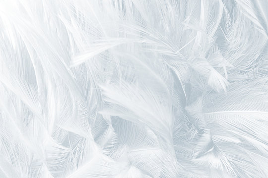Beautiful Baby blue colors tone feather texture background