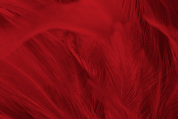 Beautiful red feather pattern texture background Wall mural