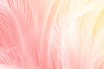 Beautiful red-pink colors tone feather with orange light texture background,trends color Wall mural
