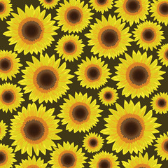 Sunflower seamless pattern background - Vector illustration