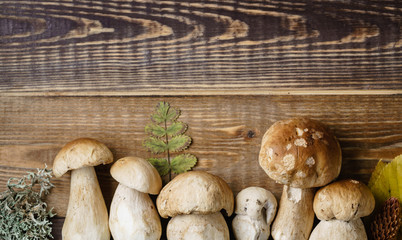 mushroom boletus on the wooden background