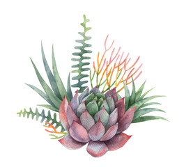 Watercolor vector bouquet of cacti and succulent plants isolated on white background.