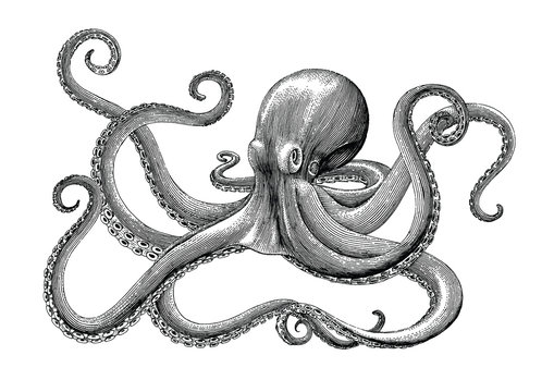 Octopus hand drawing vintage engraving illustration on white backgroud