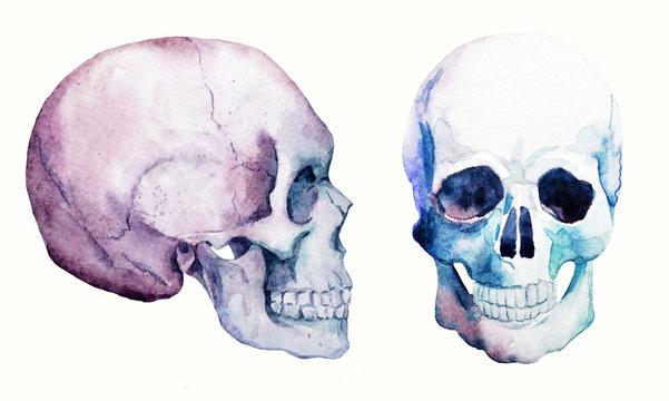 Watercolor skull set
