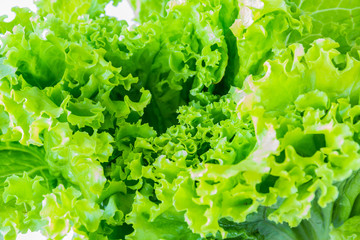 Image of lettuce The raw material for cooking  as a background