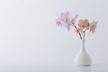 beautiful orchids in white vase on white table