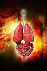 3d rendered human organs isolated on color background