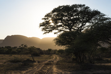 Bushveld track at sunrise
