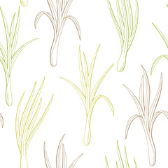 Lemongrass plant graphic color seamless pattern sketch illustration vector