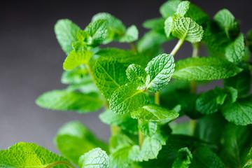 sheaf of fresh mint leaves on gray background