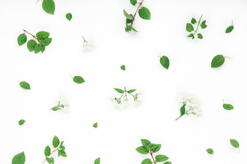 White flowers, green leaves on white background, flat lay, top view