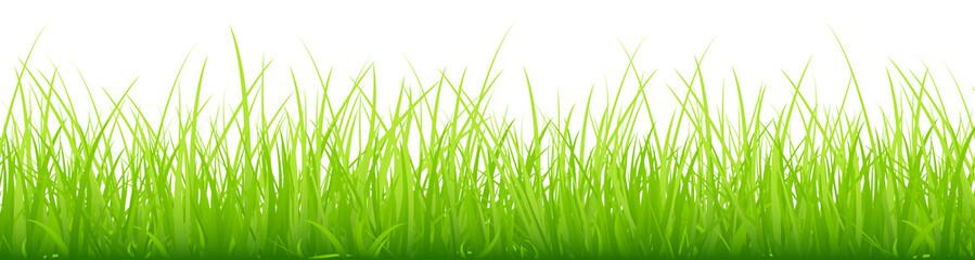Big Meadow Banner Green
