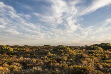 Coastal duneveld vegetation