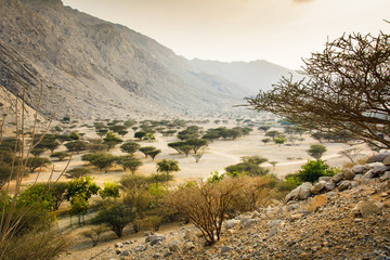 Jabal Jais mountain and desert landscape near Ras al Khaimah