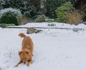 Hund im Schnee IV
