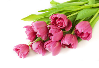 Tulips flower bunch isolated on white