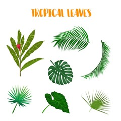 Set of vector leaves on white background