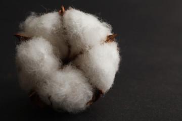 Dry blossom cotton