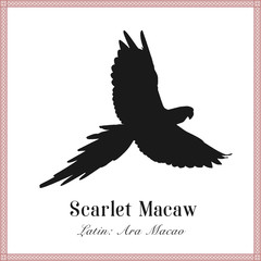 Scarlet Macaw Silhouette Illustration. Tropical Bird. Ara macao. Parrot.
