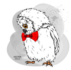 Portrait of an owl in a bow tie. Can be used for printing on T-shirts, flyers and stuff. Vector illustration