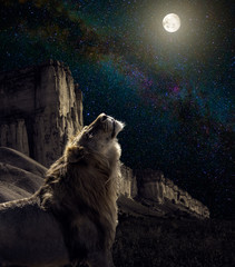 Wall Mural - lion howl to the moon