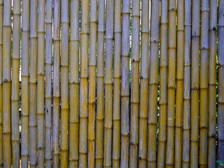 Dried bamboo fence texture background.