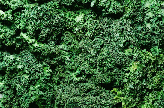 Fresh organic green kale background, selective focus, top view, copy space. Green texture