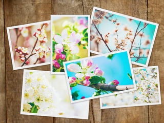 Spring flowering trees. Collage. Selective focus.