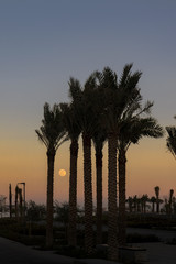 sunset fullmoon and palms