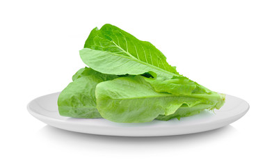 Cos Lettuce in plate isolated on white background
