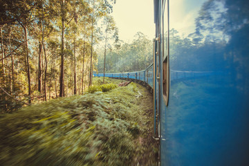 Rushing train in forest landscape with tall trees and green lush