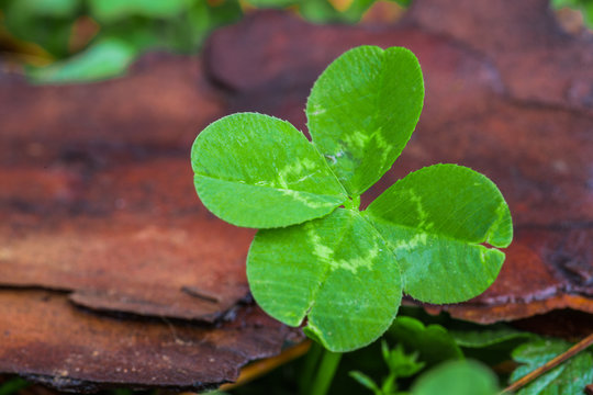 Horizontal macro photo of a bright green 4-leaf clover on the right with a green and brown background