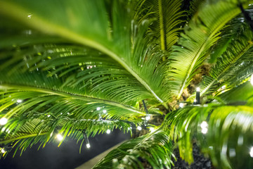 Magic green plant background with flashlights