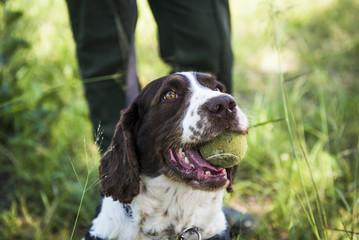 Counter poaching detection dog