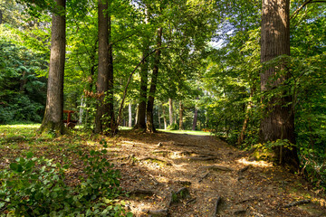 Walkway Path of Green Trees in Forest
