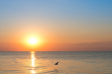 Fotomurais - sunrise over the sea, glare from the sun, beautiful landscape? flying bird