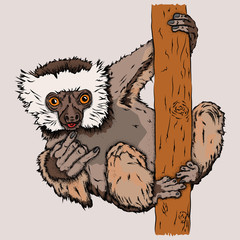 Portrait of a monkeys. Can be used for printing on T-shirts, flyers, etc. Vector illustration