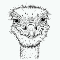 Portrait of ostrich. Can be used for printing on T-shirts, flyers, etc. Vector illustration
