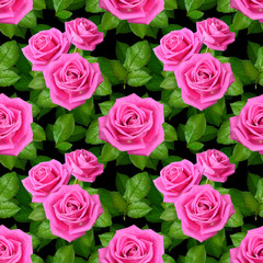 Seamless background with Pink roses on black background