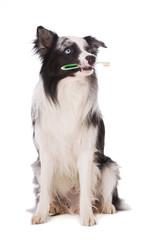 Hund mit Zahnbürste im Maul sieht nach oben