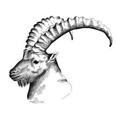 Illustration of a Capricorn head, Hand drawn with Black on white Surface