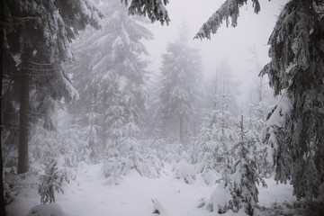 winter background, forest in snow and ice