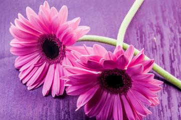 Flor color rosa