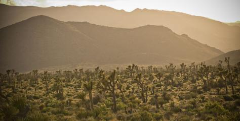 Cactus in desert landscape