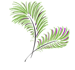 Colorful hand drawn abstract silhouette of green palms branches on white background, isolated colorful nature illustration painted by pen and paper pencil chalk, high quality