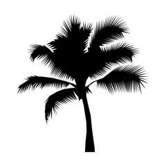 Coconut palm tree black silhouette isolated on a white background illustration. Icon, sign. Art logo design EPS