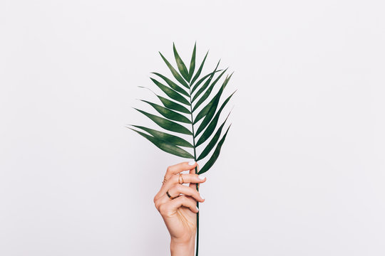 Palm leaf in female hand with manicure